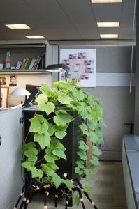 plants help against stress