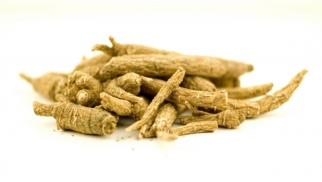 ginseng against stress